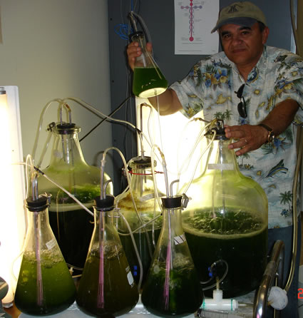 or just algae biofuels.