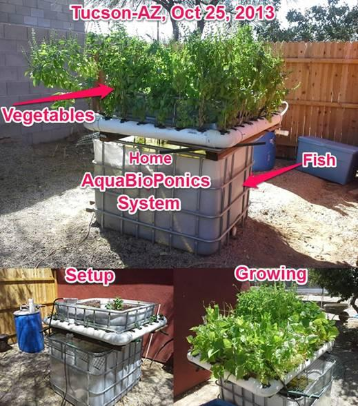 AquaBioPonics in Action (Source: Aquabioponics)
